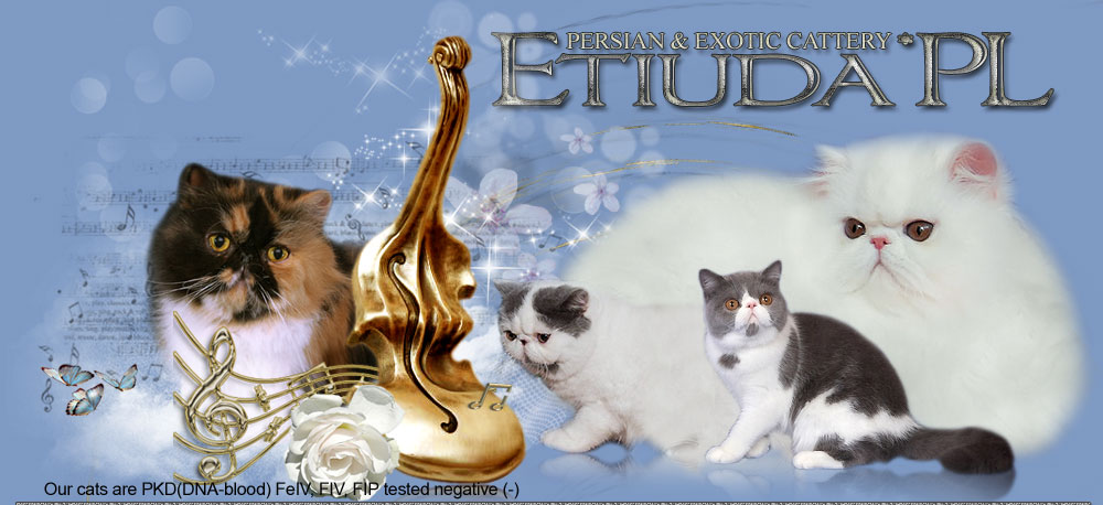Etiuda*Pl Persian and Exotic Cattery